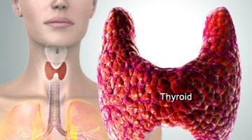 webmd rm photo of thyroid diagram rs